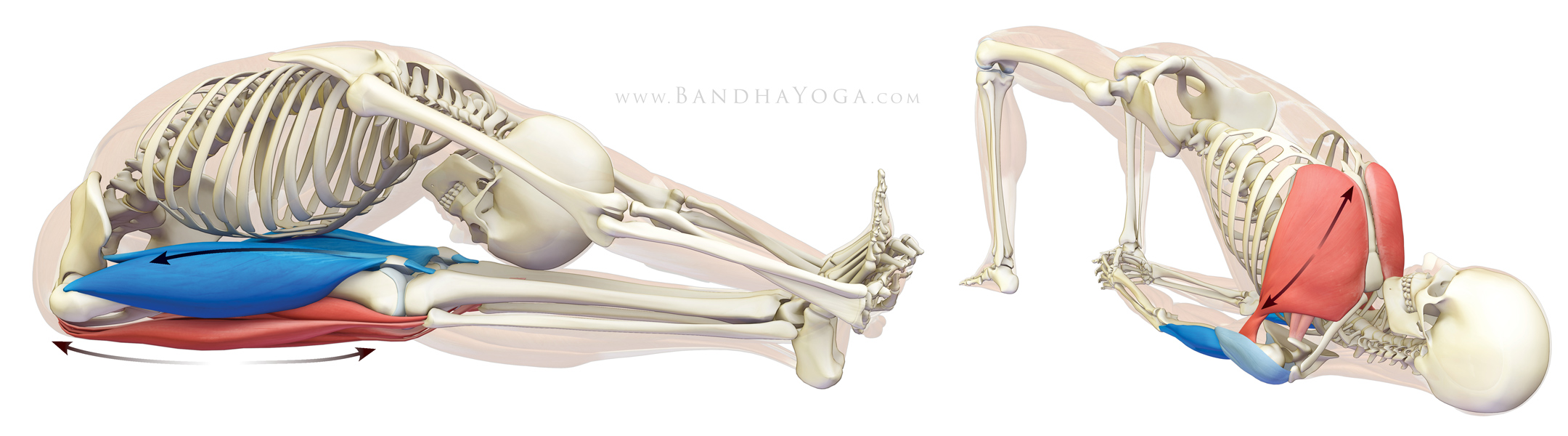 The Daily Bandha: Stretching, Aging and Your Down Dog