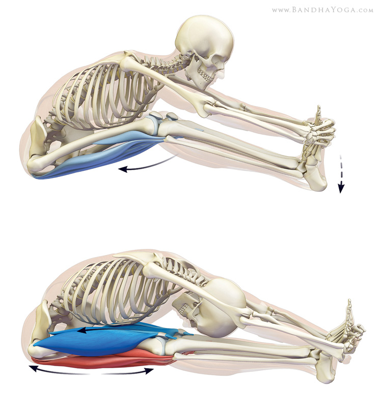 Quadriceps Reflex Related Keywords & Suggestions - Quadriceps Reflex ...