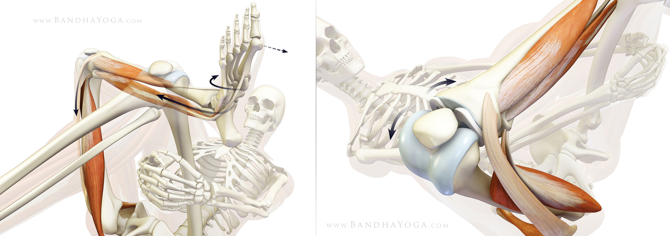 The Daily Bandha: Protecting Your Knee in Pigeon Pose