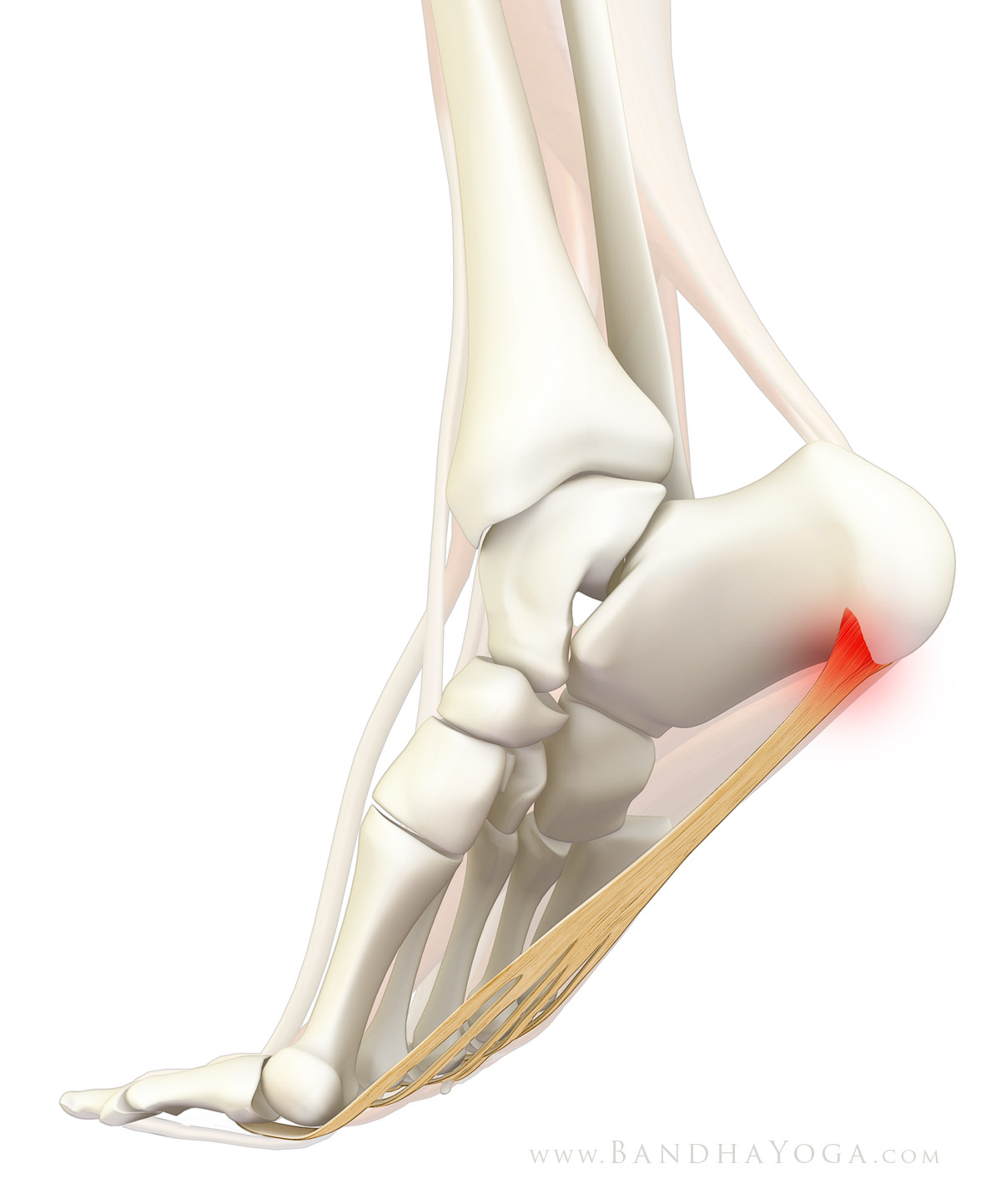 General Pain Relief Yoga Practices For Plantar Fasciitis Yogauonline