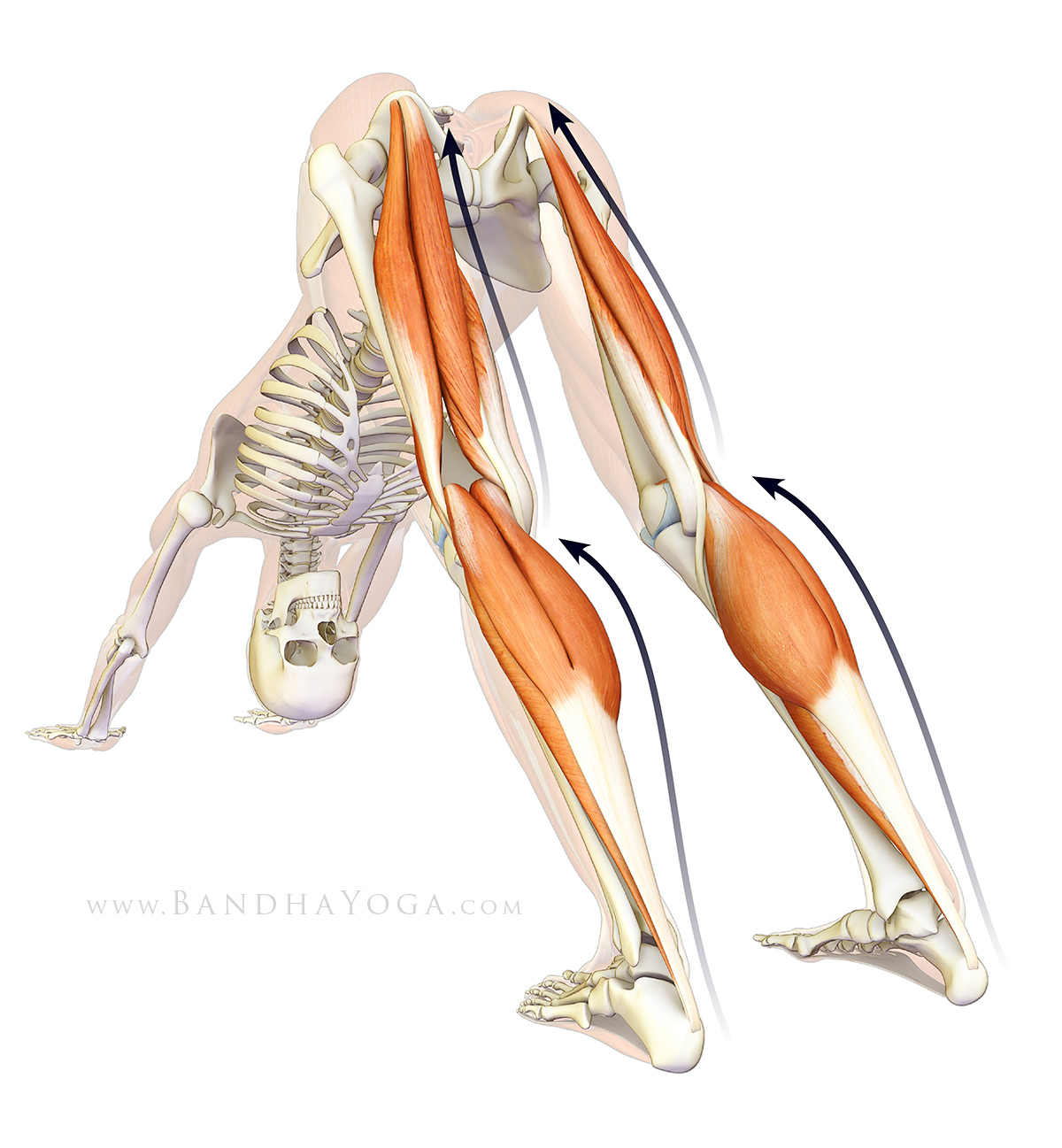 The Daily Bandha: Plantar Fasciitis, Myofascial Connections and Yoga