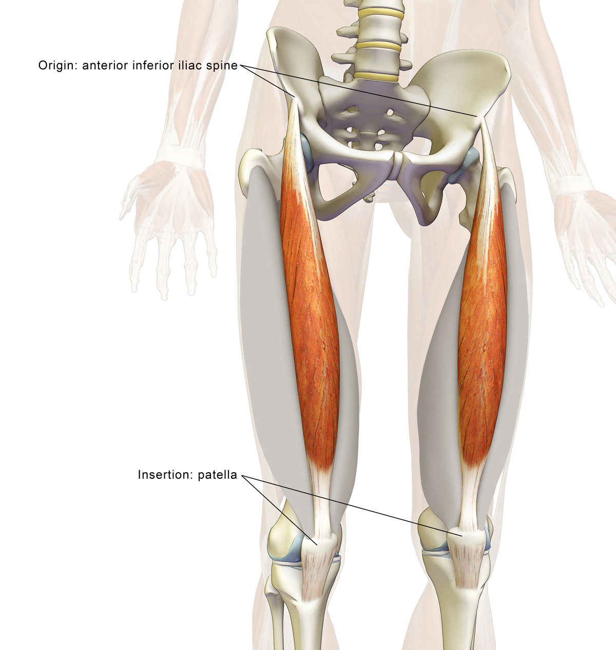 Yoga Anatomy: The Rectus Femoris Muscle in Yoga | YogaUOnline