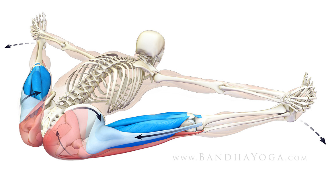 The Daily Bandha Refining Your Forward Bends With The Tfl