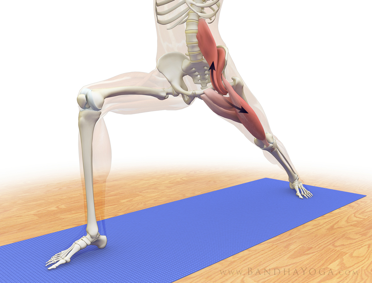 The daily bandha refining the pelvis in warrior i for Floor yoga stretches