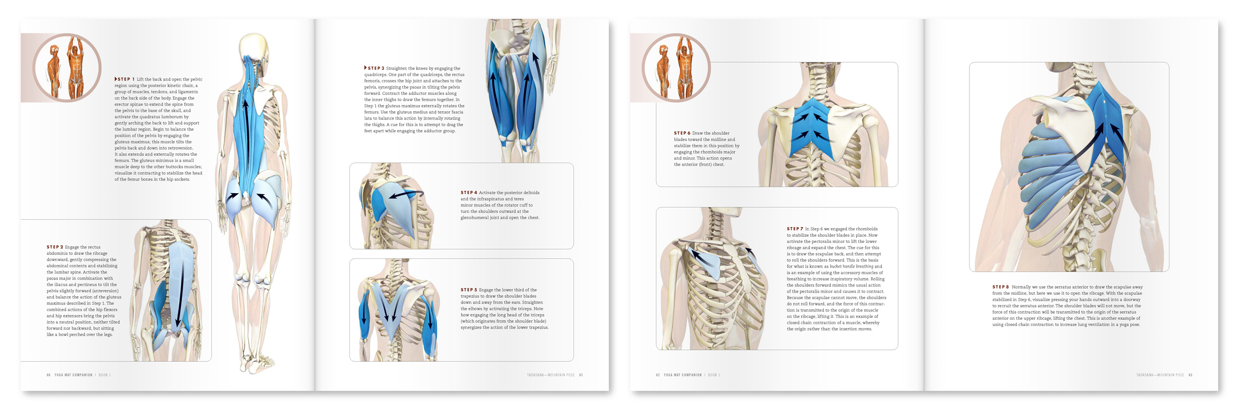 The Daily Bandha Shoulder Kinematics In Yoga Part I