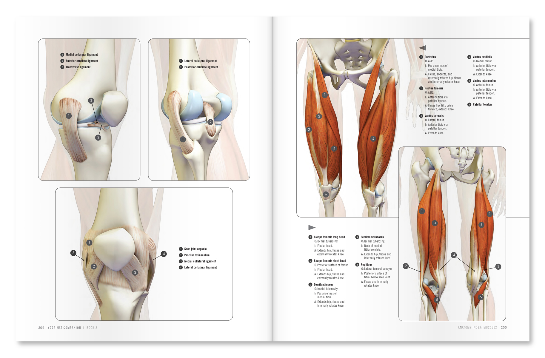 The Daily Bandha: Strong Thigh Muscles Benefit People with Knee ...