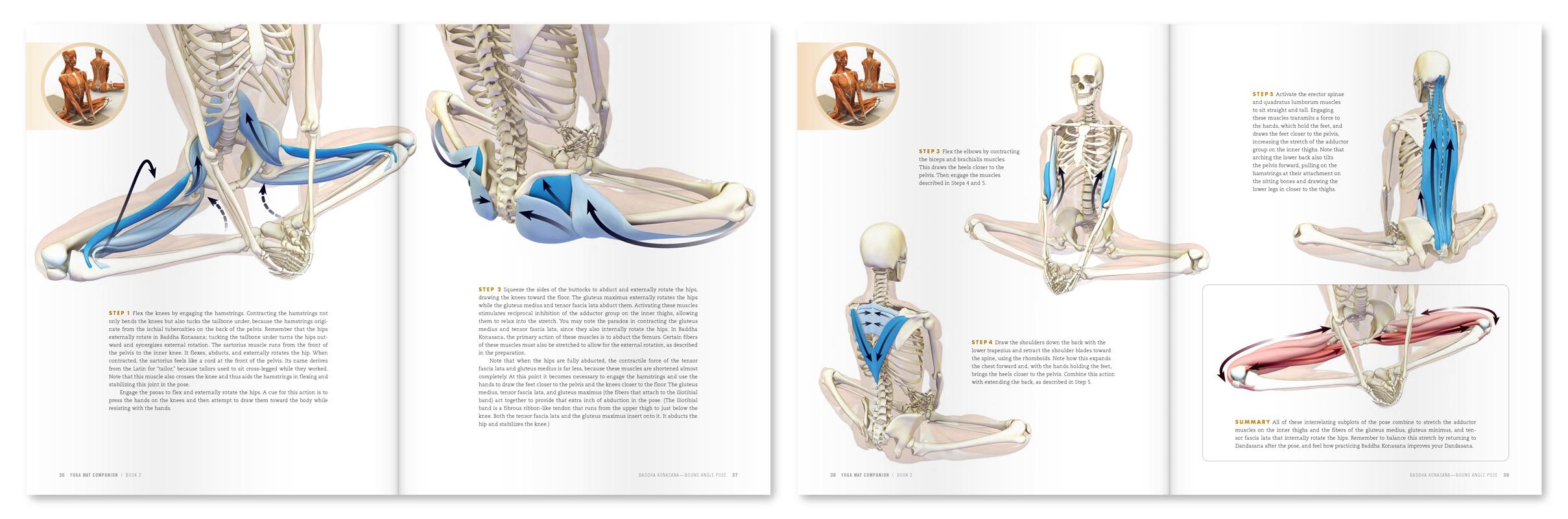 Image result for baddha konasana anatomy