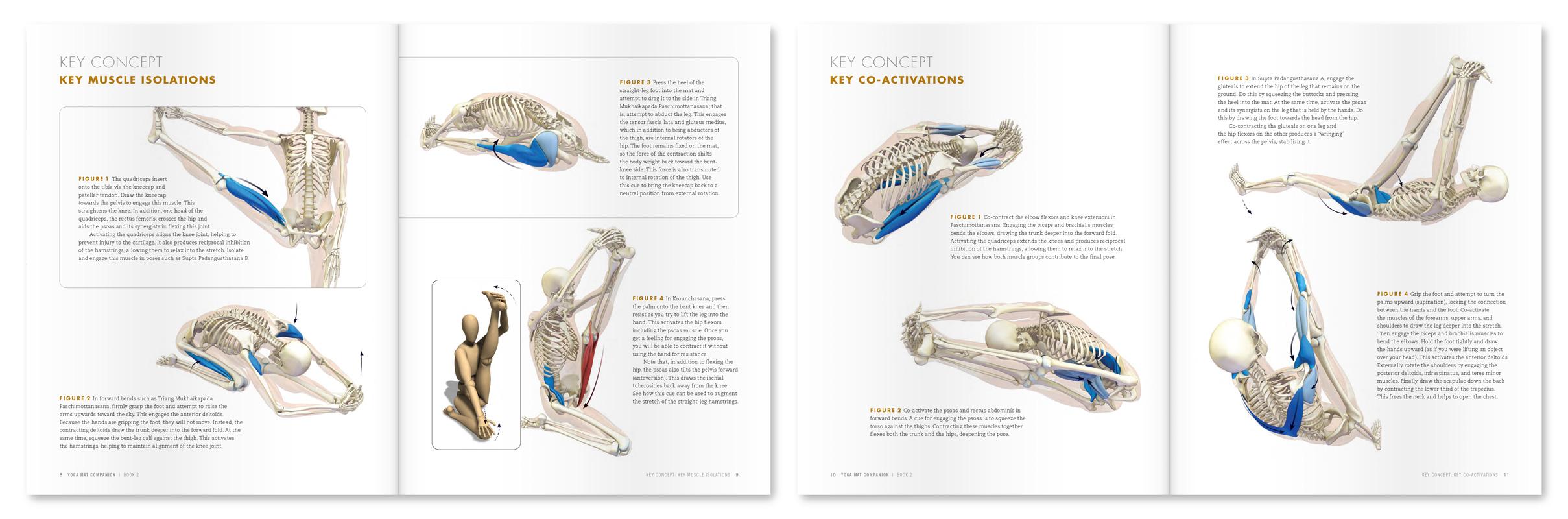 The Daily Bandha: QuickQuiz #6 - The Anatomy and Biomechanics of ...