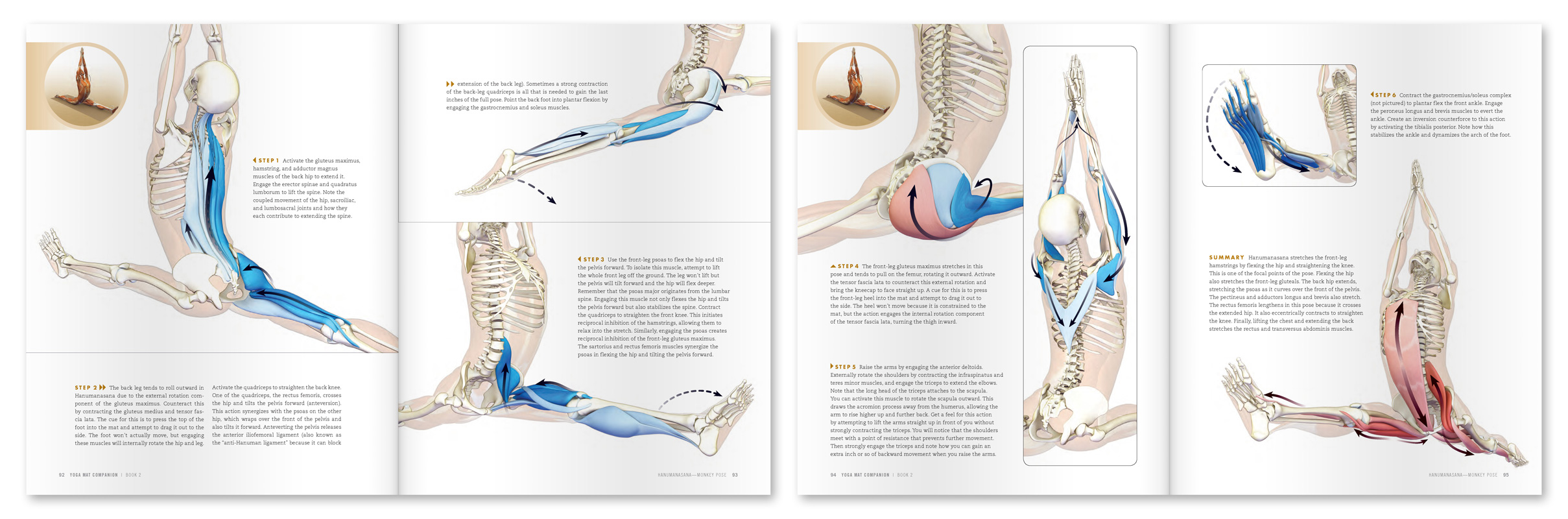 Anatomy For Hip Openers And Forward Bends Ray Long These Are