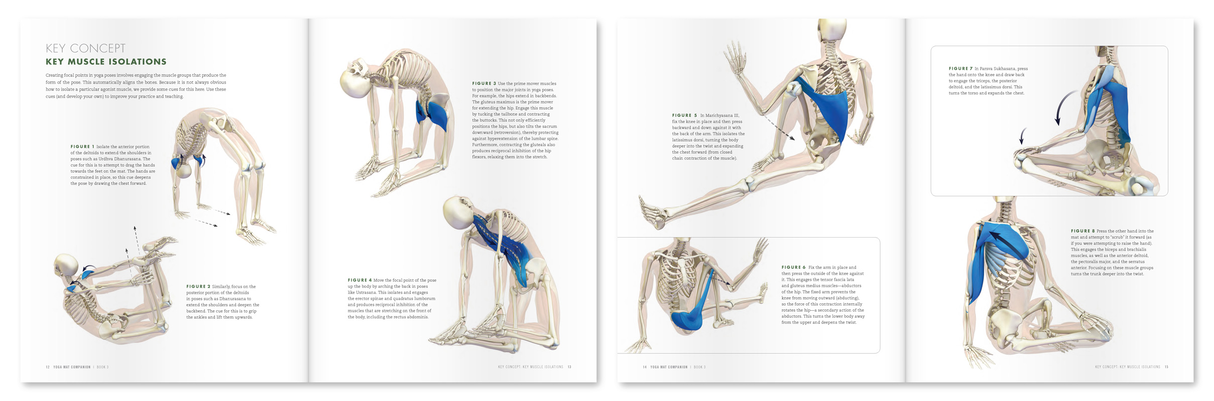 The Daily Bandha: Your Glutes and Lats in Bird Dog Pose