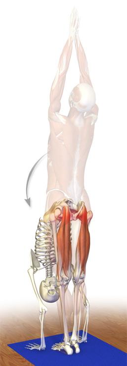 Kinetic Health - Calgary: Resolving Hamstrings Injuries Part 4