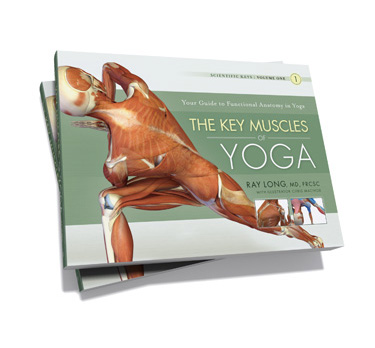 The Key Muscles of Yoga