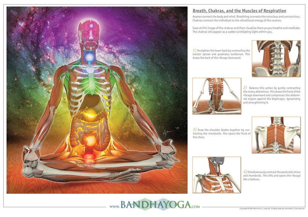 Chakras the yogi coach