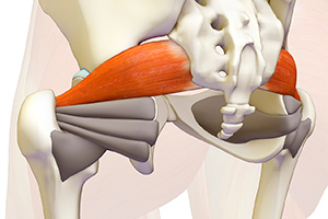 Your Piriformis Muscle