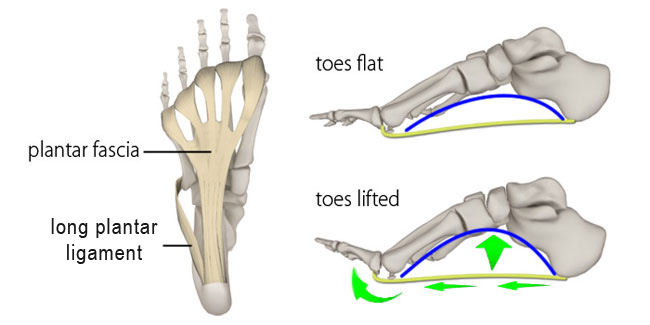 The Longitudinal Arches Of The Feet In Yoga